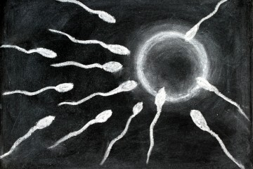 Fertilisation of sperm and egg drawing with chalk on blackboard